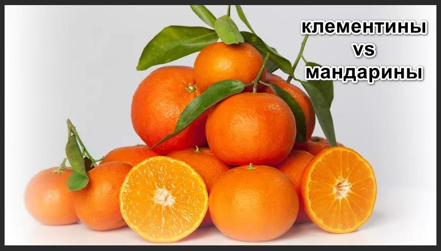 Чем отличаются клементины от мандаринов